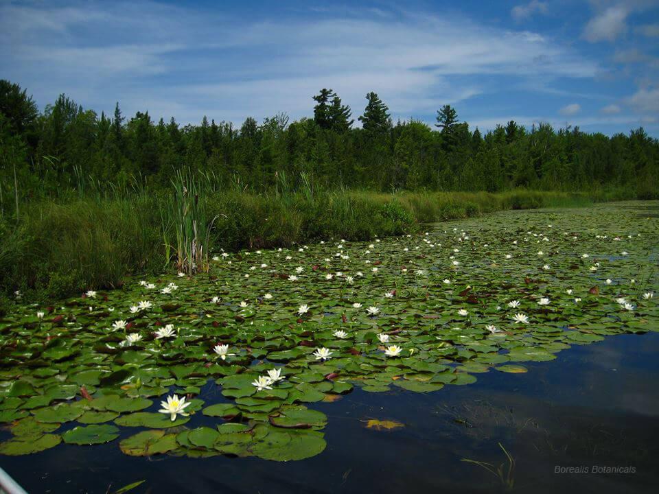 Cedar River Preserve - The Leelanau Conservancy
