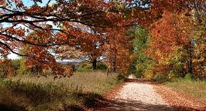 Fall color rural road fader photo