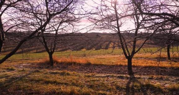 Egeler Brothers Farm