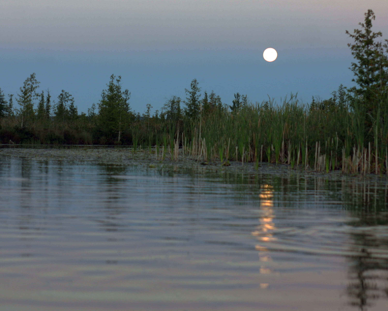Lisa Genesen Cedar River 2