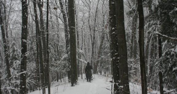 Krumweide snowshoeing on trail