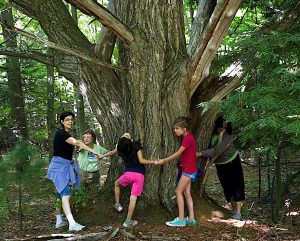 treehug224x180
