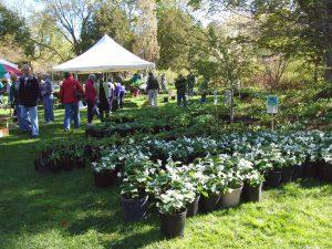 Village Green Plant Sale