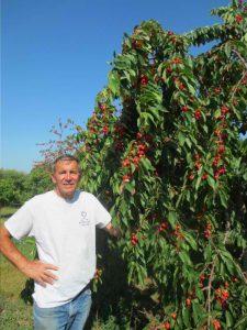 Don Kiessel admires last year's crop of cherries.