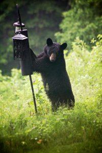 Michael Collier, Bear at Feeder
