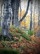 Trish Petrat, Clay Cliffs Big Trees
