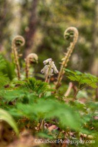 Ken Scott Clay cliffs white flower two vertical20130509_3847hen
