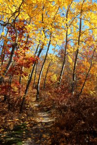 Hiking at Leelanau Conservancy Natural Areas brings visitors up close and personal with the stunning beauty that is a Leelanau Fall. Photo by Maia Hausler.
