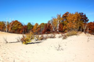 A diversity of tree species and habitats make Houdek Dunes Natural Area a brilliant spot for fall color viewing throughout the season. Photo by Maia Hausler.
