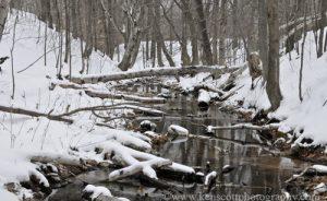 KAScott_20100214_0015Chippewa-Run-winter-stream-500x306
