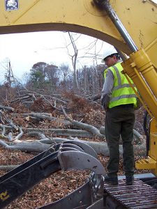 A worker surveys the downed trees at Alligator Hill.