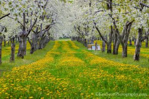 Orchard 05 2013