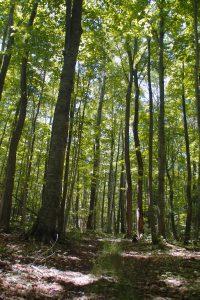 Finton-Boismier-Forest5WEB