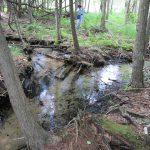 Hatlem Creek Preserve 003