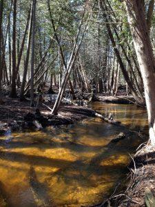 Leo Creek
